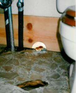 inbathroom