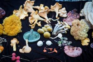alan-muskat-mushrooms