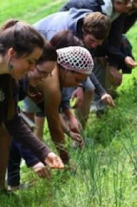 Picking Garlic Grass