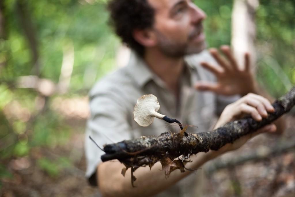 mushroom stick