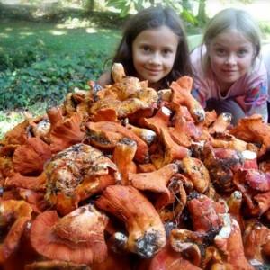 lobster kids